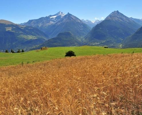 Cereali - La Biopanetteria